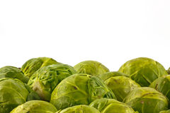 Close up of sprouts Stock Image