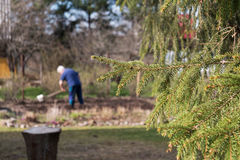 Close up of spruce branch and cottager digging the plot in the background. Summer vacation in the country, village Stock Photography