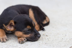 Close up squalid young dog Stock Photography