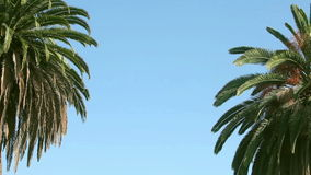 Close up two swaying palms tree against the blue sky stock video footage
