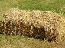 Close up of stack of dry straw Stock Image
