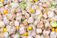 Close up stack fo fresh cape gooseberries and nature background. stock image