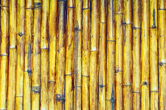 Close up stack of yellow bamboo fence background processed in vintage style Royalty Free Stock Photos