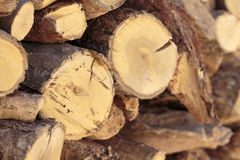 Close-up of stacked firewood of olive tree Stock Image