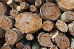 Close-up of stacked sawn trunks stock images