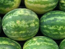 Close up of stacked watermelons Stock Photography