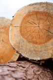 Close up of stacked wood barks with rings Royalty Free Stock Photography