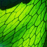 Close Up of Staghorn Fern Leaf Stock Photo