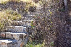 close up of a stair made with steps of concrete and stones in a garden with many different plants growing around the steps. royalty free stock photography