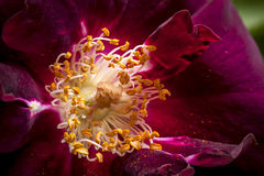 Close up of stamen. Stock Image