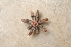 Star anise, star aniseed, badiane or Chinese star anise royalty free stock photography