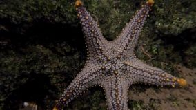 Close up star fish in fish tank.  stock footage
