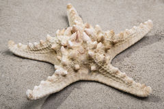 Close up of Starfish Royalty Free Stock Photos