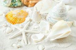 Close up of starfish and seashells on white sand background Stock Photos