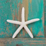 Close-up of a starfish and a turquoise wooden background Stock Photos