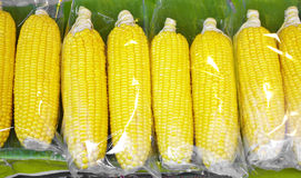Close up steam corn Stock Image