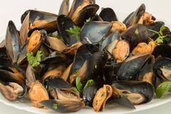 Close up of steamed fresh mussels on white plate Royalty Free Stock Photo