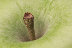 Close-up of the stem of a an apple Stock Photos