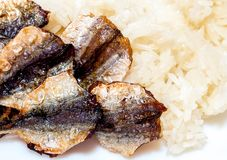 Sticky rice and fried sun-dried fish Stock Photo