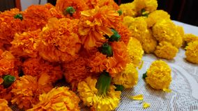 Group of Tagetes florals. Close up still of orange Tagetes flowers stock photos