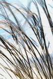 Close up of the stipa plant in the wonderful sunset light Stock Image