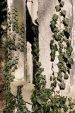 Close-up of stone ruins in garden, with english ivy. Growing over it - in sunlight - texture, background Stock Photography