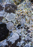 Close-up stone texture Stock Images