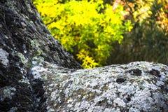 Close-up stone texture Royalty Free Stock Photos