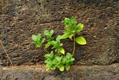 Close up stone wall and new grass Royalty Free Stock Image