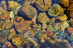 Close-up of the stones through clear water flowing Stock Image