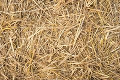 Straw background texture. Close up of straw background texture royalty free stock photography
