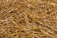 Close up of straw background Stock Photos