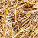 Close up of straw background texture. Close up of dry straw background texture stock photo