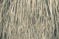 Close up straw background. Texture of straw Royalty Free Stock Photography