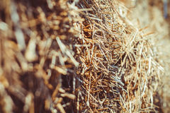 Close up of straw background texture. Straw close-up on a sunny day outside stock photo