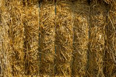 Close up of a straw bales background.Straw bale texture. Wheat haystack in field.Large pile of hay bale.Blocks stacked bales of straw for livestock royalty free stock image