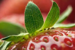 Close-up Strawberries Royalty Free Stock Images