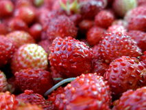 Close up of strawberries. Many wild strawberries in bowl, closeup royalty free stock photos
