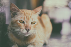 Close up stray cat on street in park with vintage filter background Stock Photo