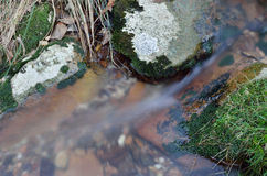 Close-up of a stream at long shutter speed Royalty Free Stock Photo