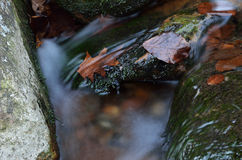 Close-up of a stream at long shutter speed Stock Images