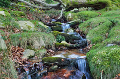 Close-up of a stream in the mountain slope Stock Photography