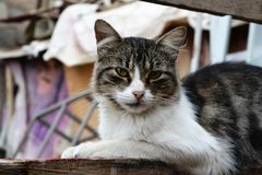 Close-Up Of Street Cat stock images