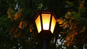 Street light under trees at night. Close up street light under trees at night stock video