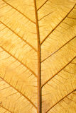 Close up Structure of Grunge Dry Leaf Texture Stock Photography
