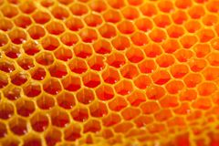 Close up studio shot of organic honey in a honey-comb - healthy food concept. Close up studio shot of organic honey in an authentic honey-comb - healthy food Stock Images