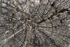 Close up of stump Stock Photos