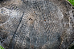 Close up of stump Stock Images