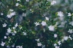 Succulent Close up. Close up of a succulent Stock Photos