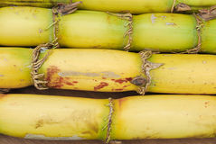 Close up Sugarcane stock photography